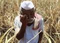 ভারতে প্রতি ৪৬ মিনিটে একজন কৃষকের আত্মহত্যা